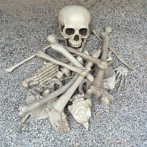 28 Piece broken bone skull
