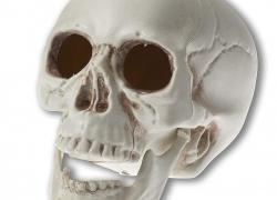 Abrante Skeleton Simulation Plastic Skull